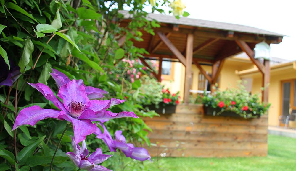 Gartenlaube mit Clematis Blüten im Gästehaus Gerlinde
