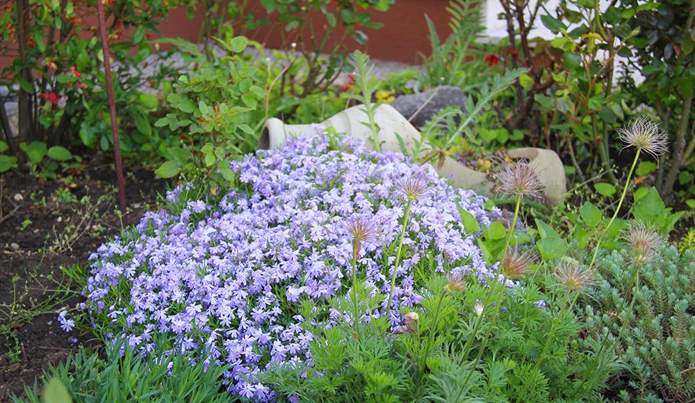 Amphore inmitten von Blüten im Garten vom Gästehaus Gerlinde